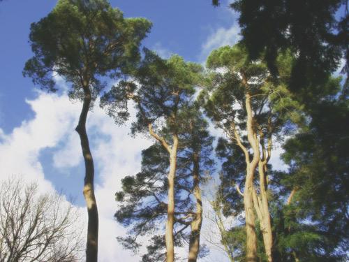 ordinary-things-trees