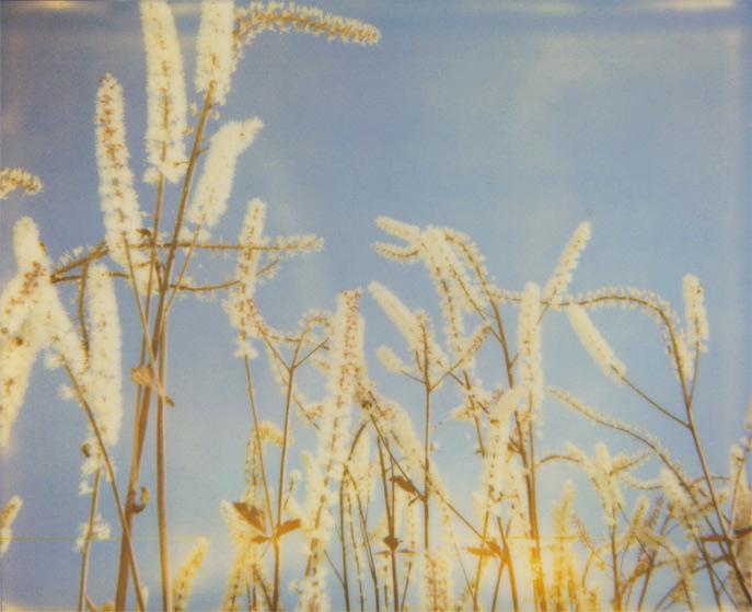 grassy things