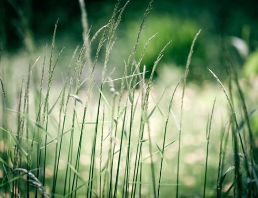 grass2-520x400