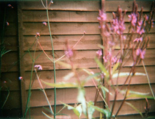 garden - taken with diana and instant back