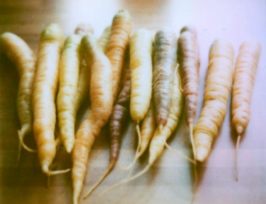 polaroid carrots