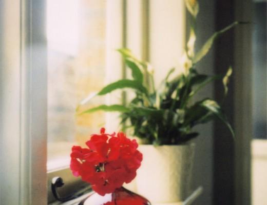 windowsill - polaroid sx70