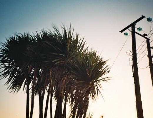 Palm trees - Lomo LCA