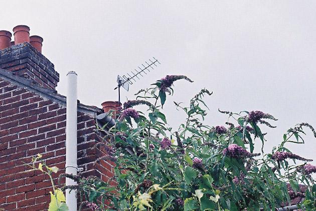 wisteria - Pentax K1000