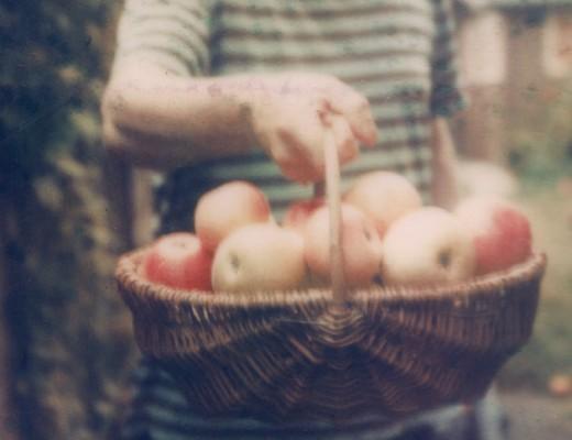apple harvest - polaroid sx-70
