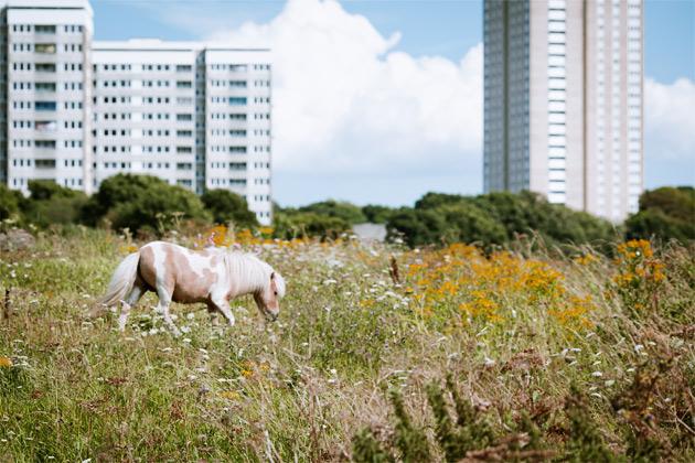 pony and tower blocks