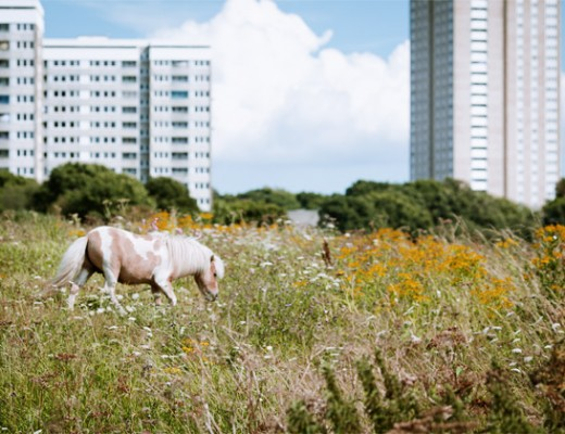 pony and tower blocks
