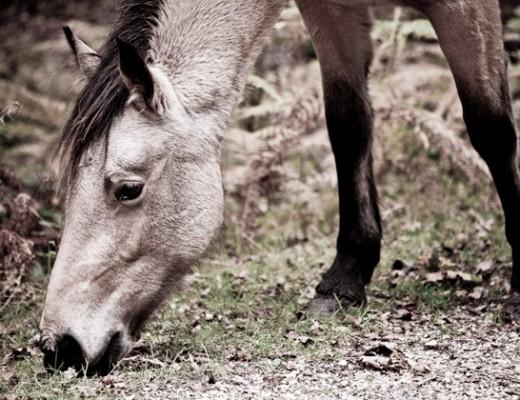 horsie - after