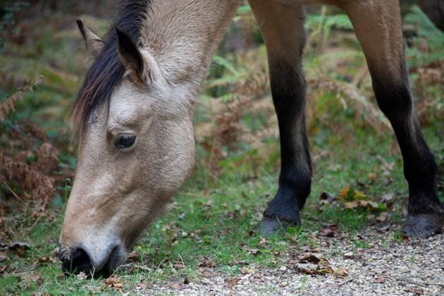 horsie - before