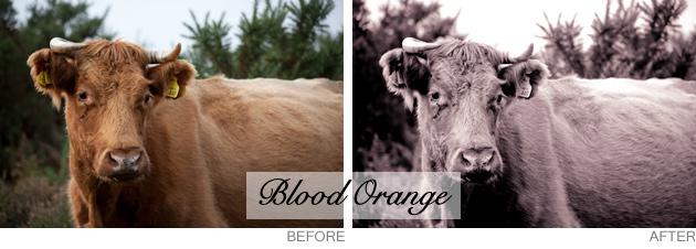 lightroom preset - blood orange
