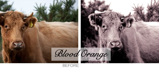lightroom preset - blood orange