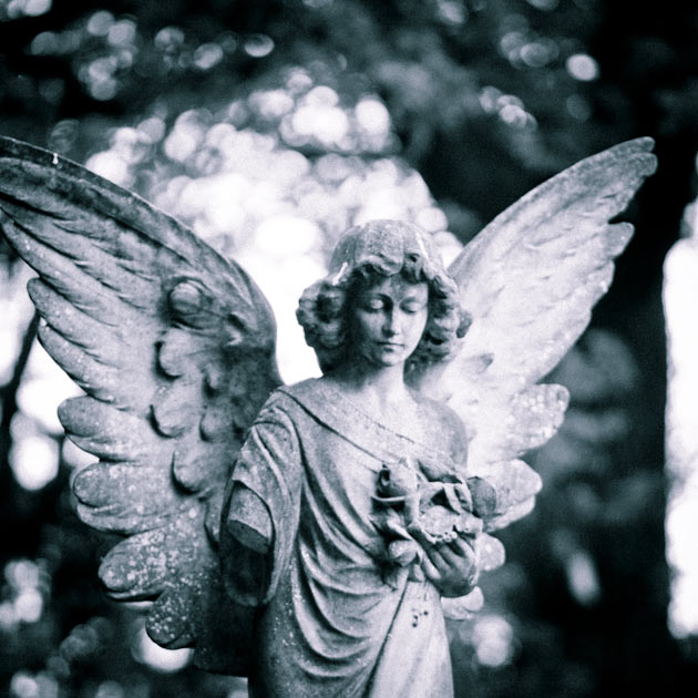 angel with bokeh
