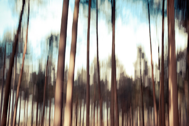 blurry trees 1