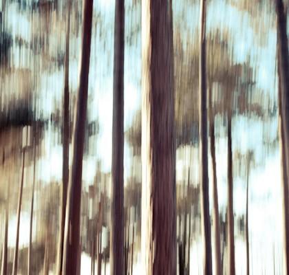blurry trees 2