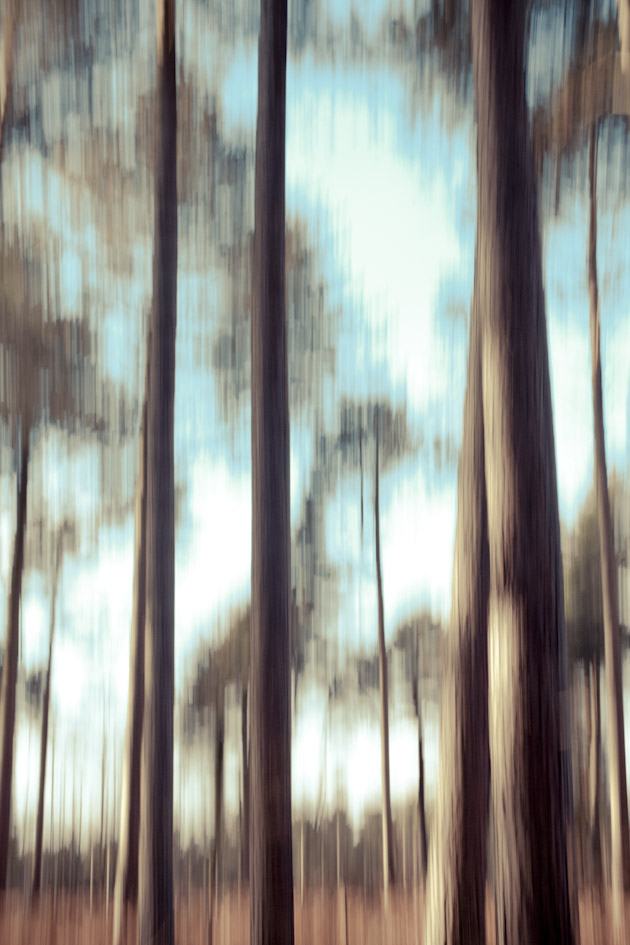 blurry trees 4