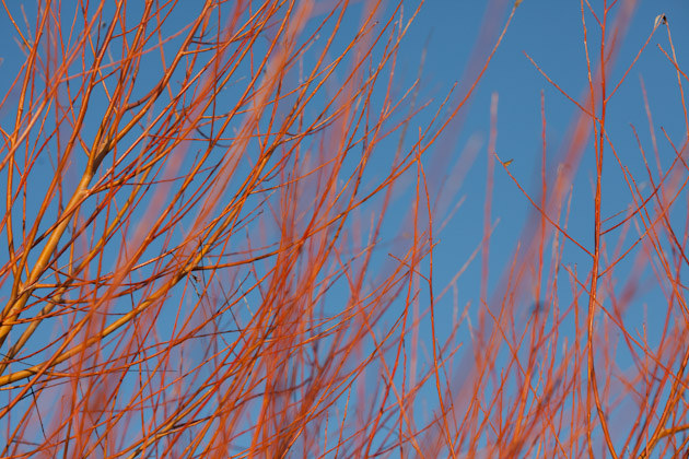 red branches 2
