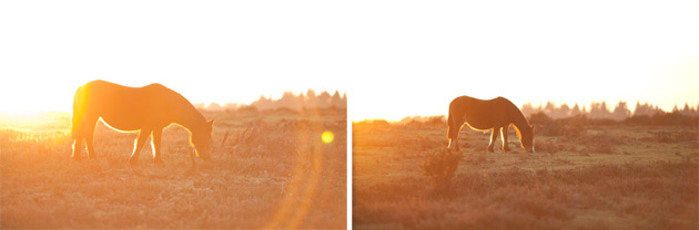sunset and ponies