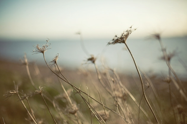 more weeds