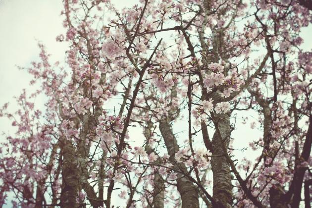 some more blossom
