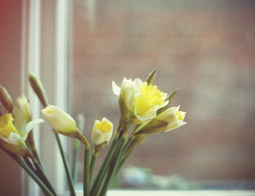 daffs.jpg_effected