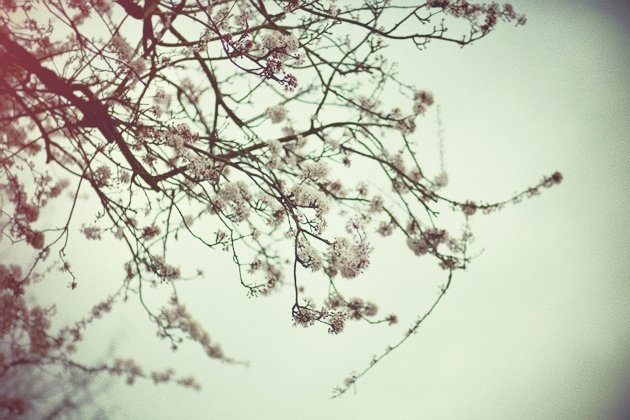 hawthorn blossom (i think)