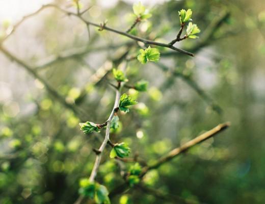 pentax-green