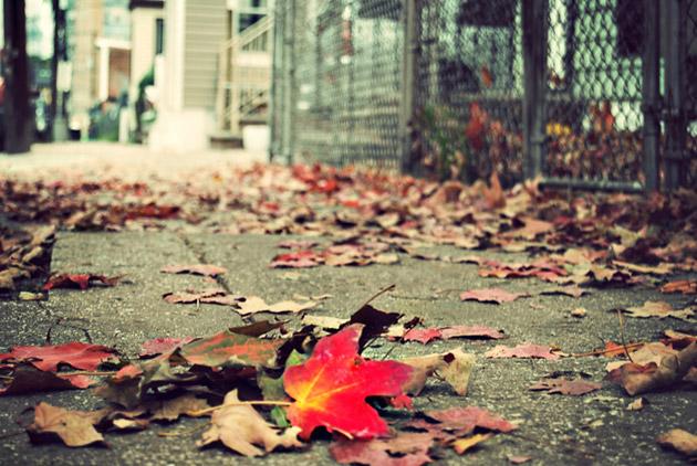 Red Leaf by Scarlett Hernandez