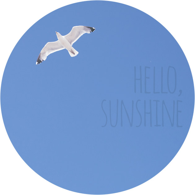 hello sunshine - seagull