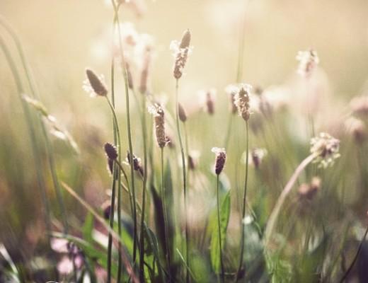 grassy.jpg_effected-002