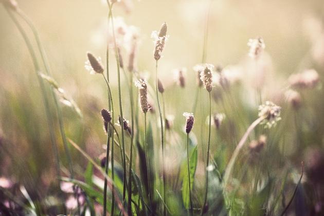 grassy sunshine