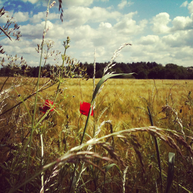 Lonesome Poppy