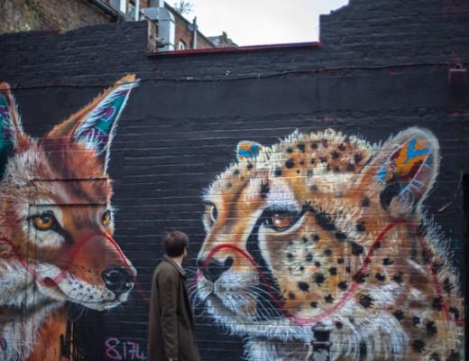 fox-cheetah