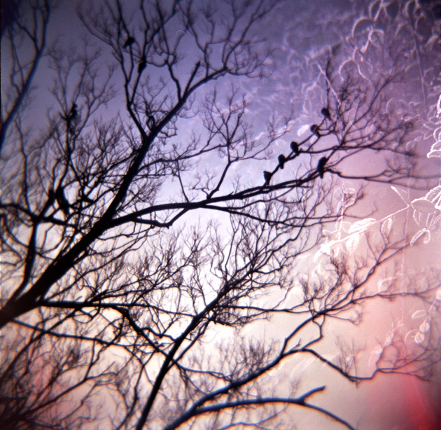 Winter double exposure - Diana F+