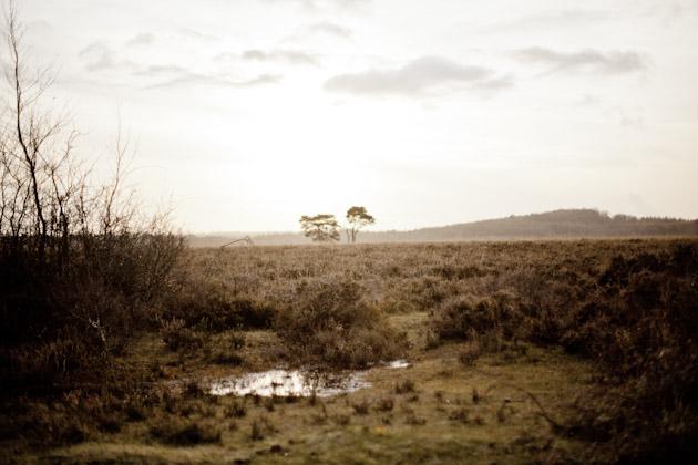 boggy heathland - New Forest