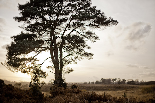 tree in the New Forest