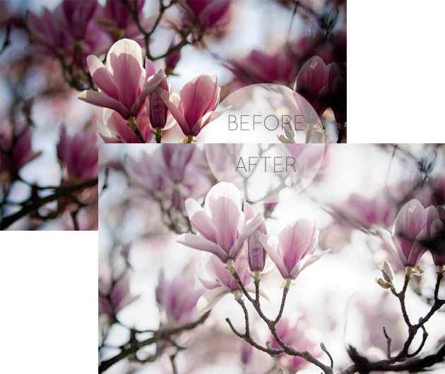 frosty photoshop action - magnolias