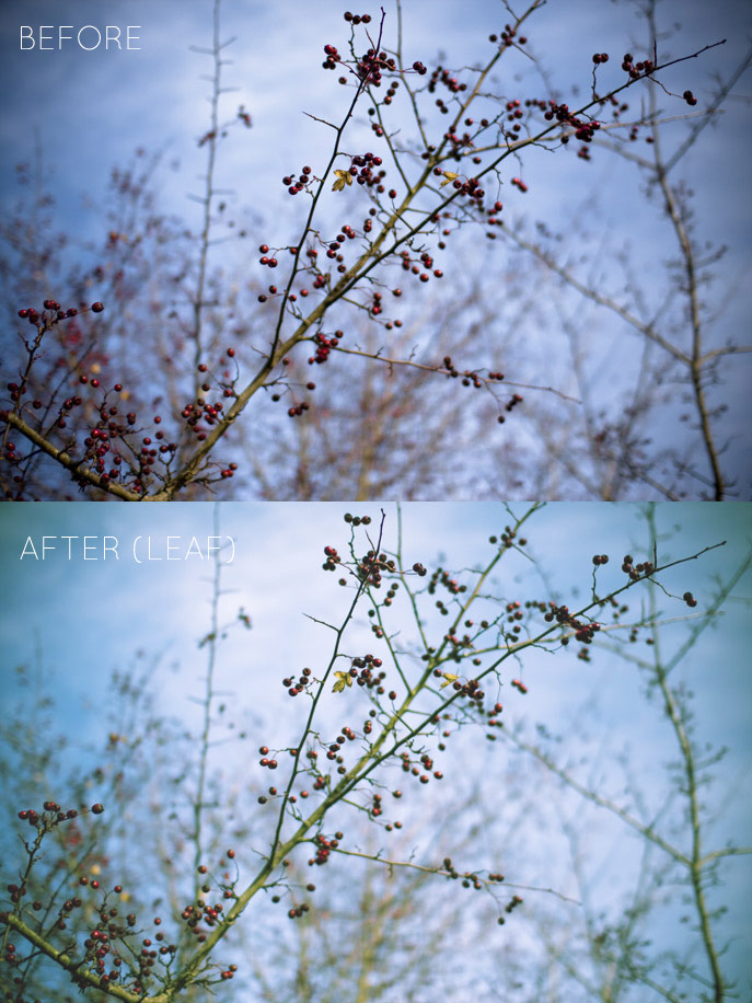 before & after - leaf