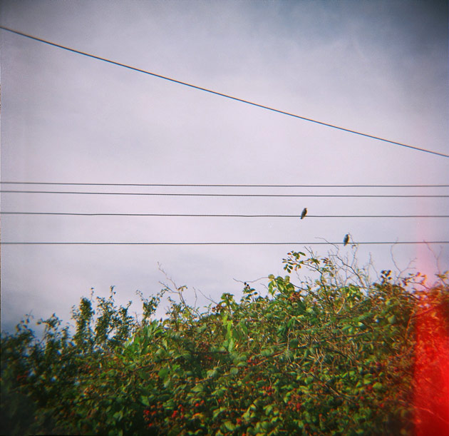 power lines - light leak