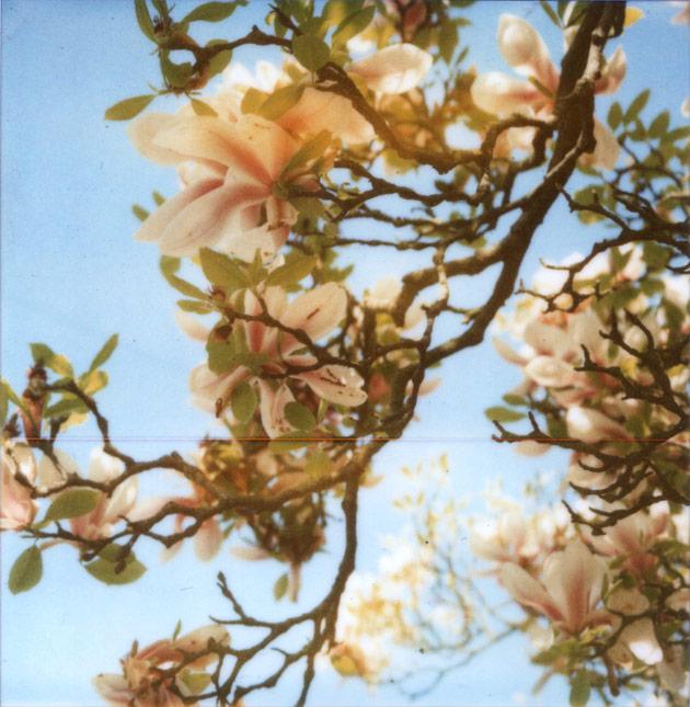 polaroid SX-70 - magnolia