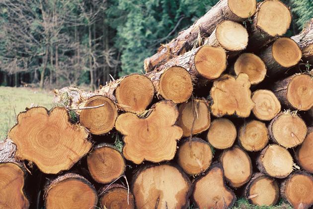 big logs - pentax k1000