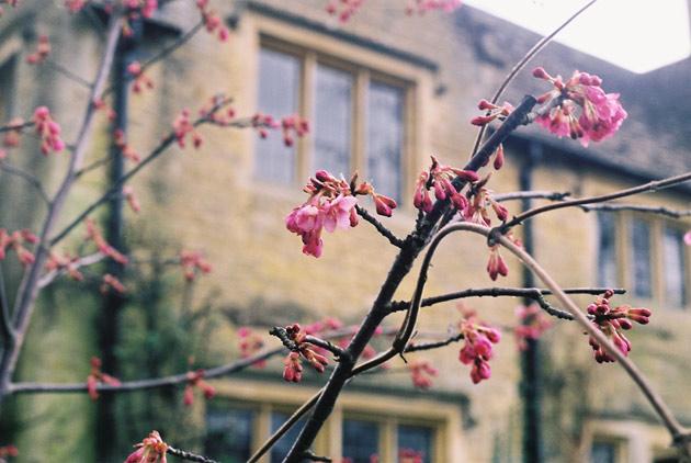 blossom - pentax k1000