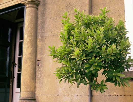 broadway-bush-630