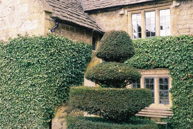 Broadway topiary - Pentax K1000