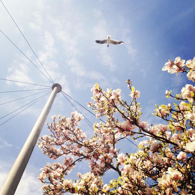 magnolia and seagull