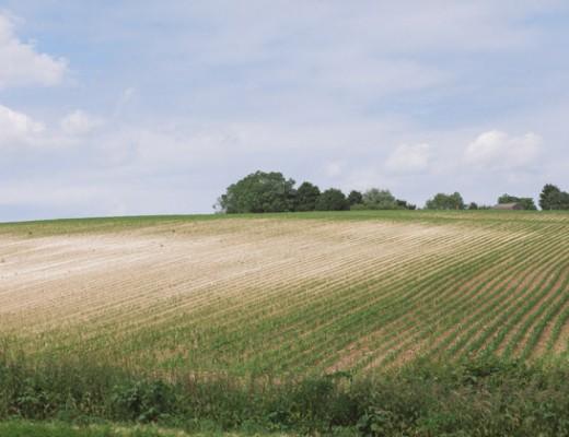 lv-dry-field
