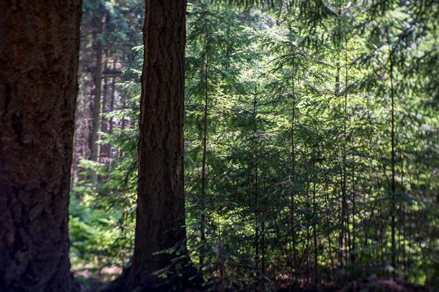 new pines