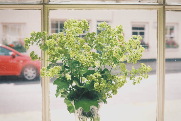 flowers in a window