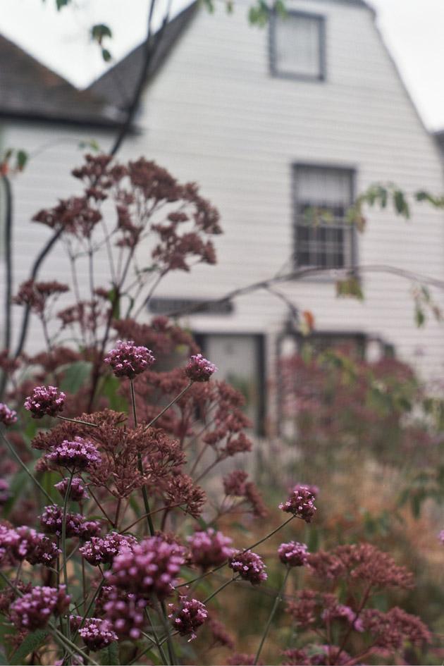 whitstable garden - pentax k1000