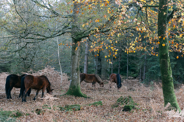 some horses - brown ones