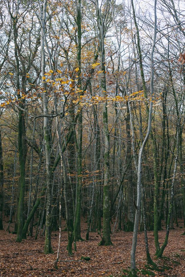 really tall trees